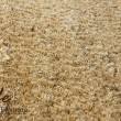 Natural Coconut Mat or Coco Mat or Coir Mat 2